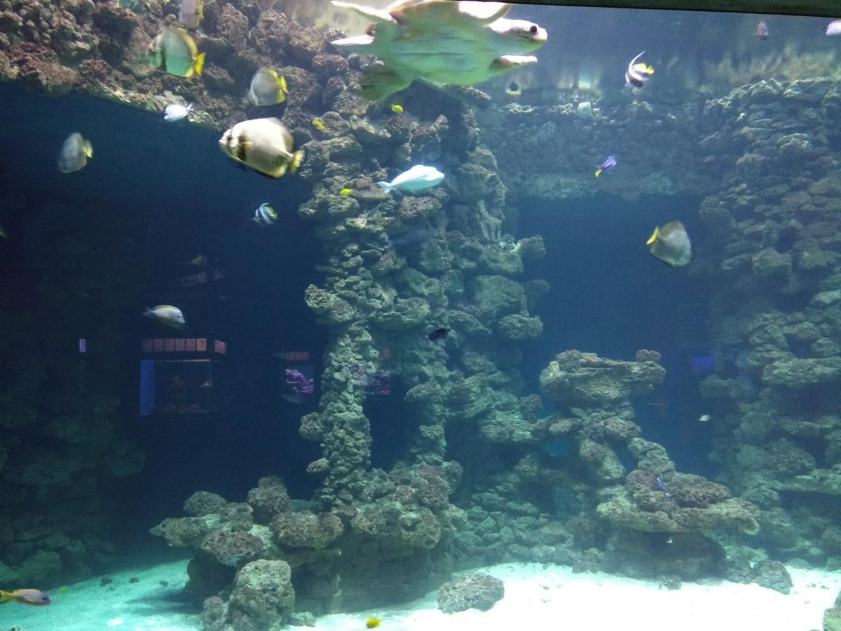 Eines der Aquarien im deutschen Meeresmuseum