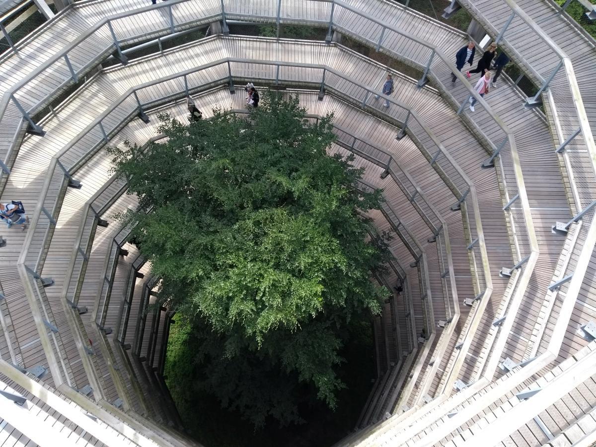 Auf dem Hauptturm des Baumwipfelpfades mit Blick nach unten
