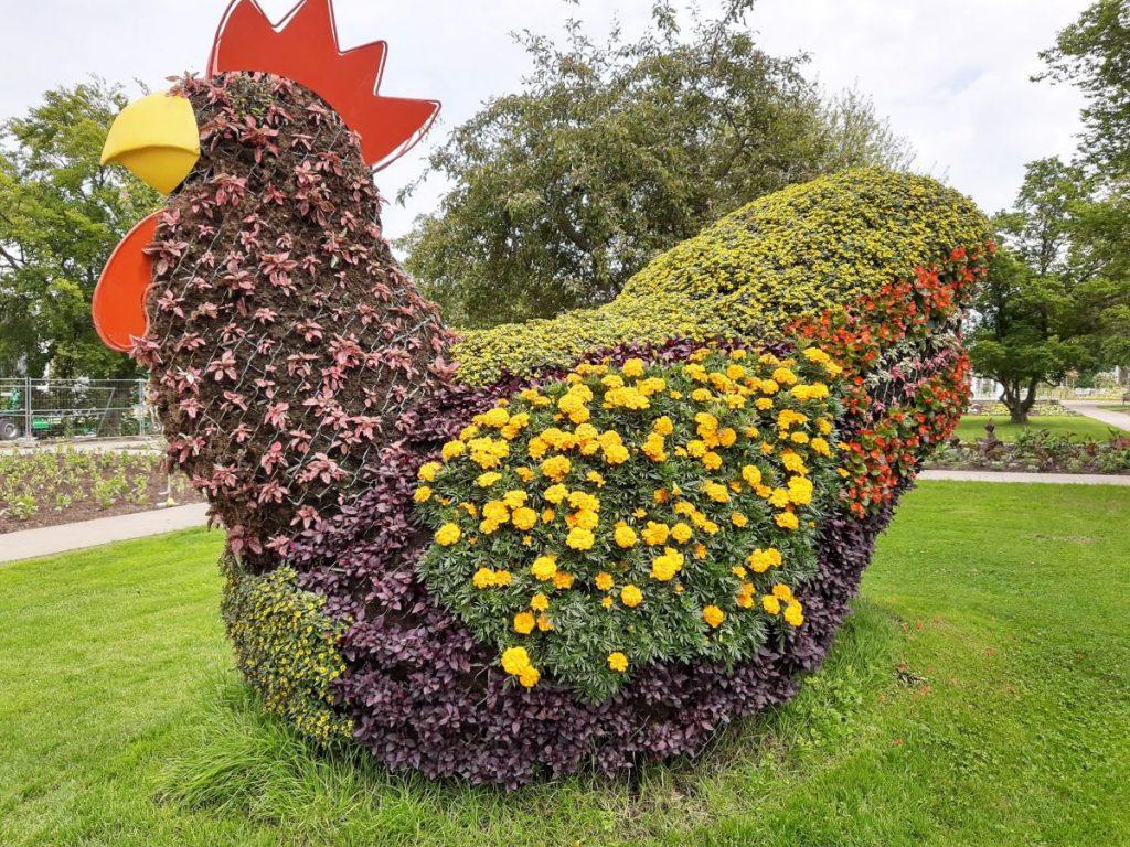 Ein Hahn als Pflanzenkunst im Egapark in Erfurt