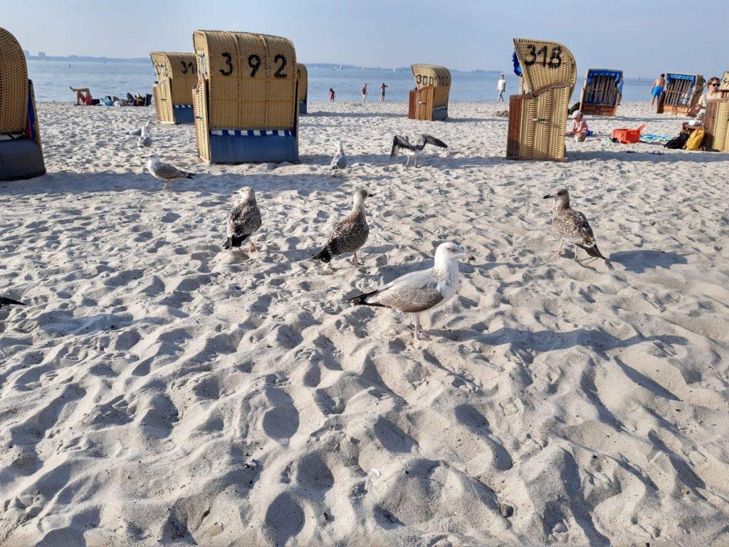 Strand in Laboe mit Strandkörben und Möwen